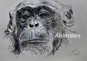 Dibujos de animales, Javier Olmedo