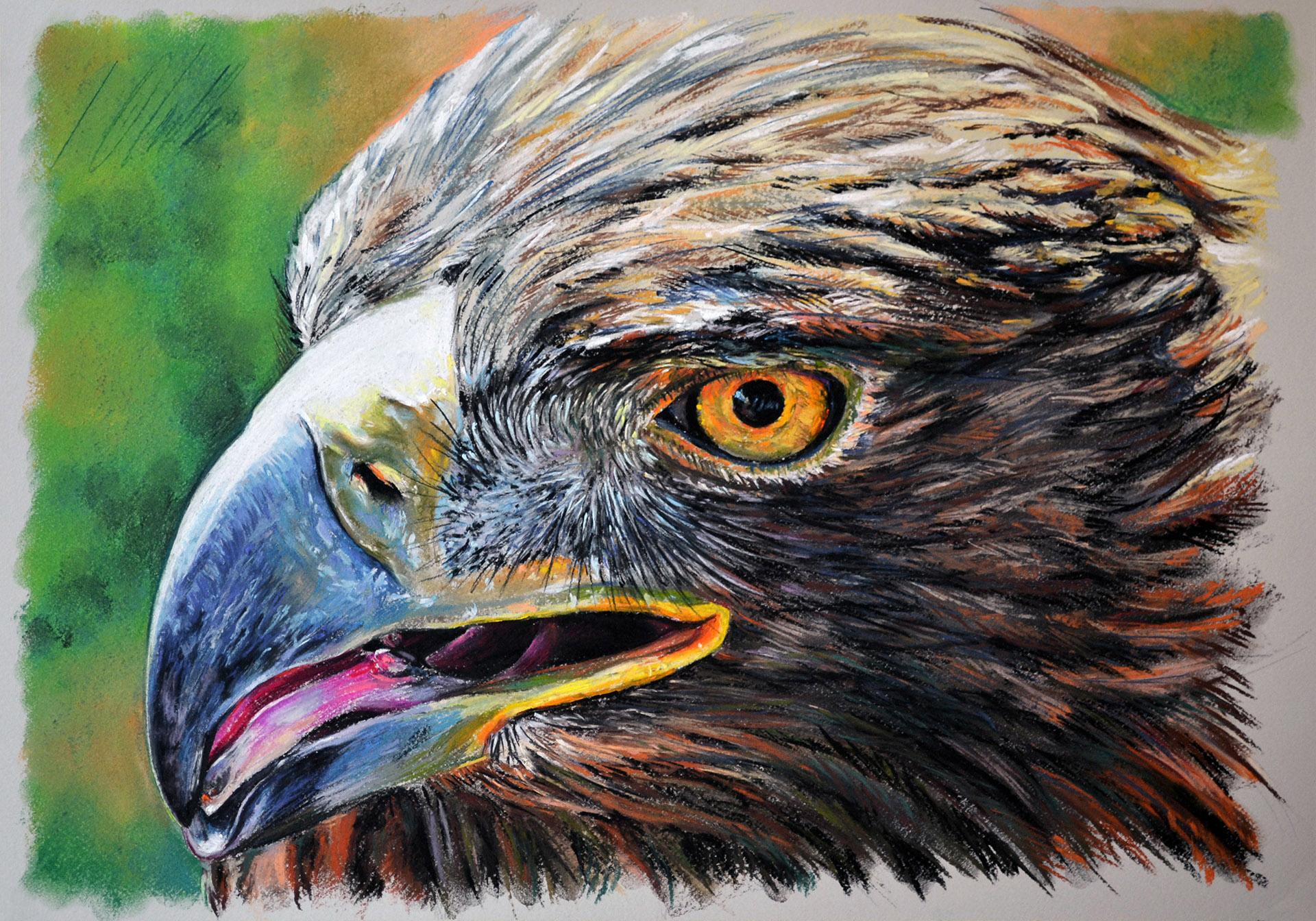 Águila real, pastel, 50 x 35 cm. Javier Olmedo. 2014