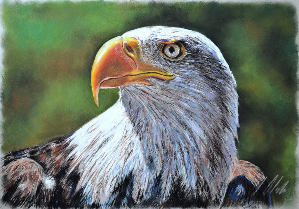 Águila de cabeza blanca, 50 x 35 cm, pastel. Javier Olmedo. 2014. PV 139,00 €