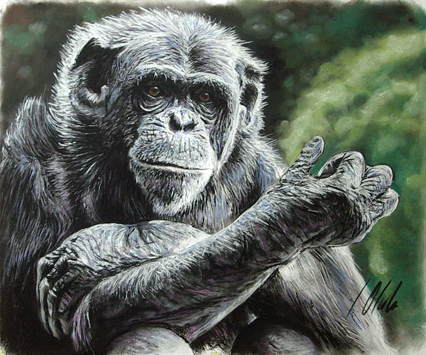 Chimpancé macho. Pastel, 50 x 70 cm. Javier Olmedo - 2015 -  PV 95 €