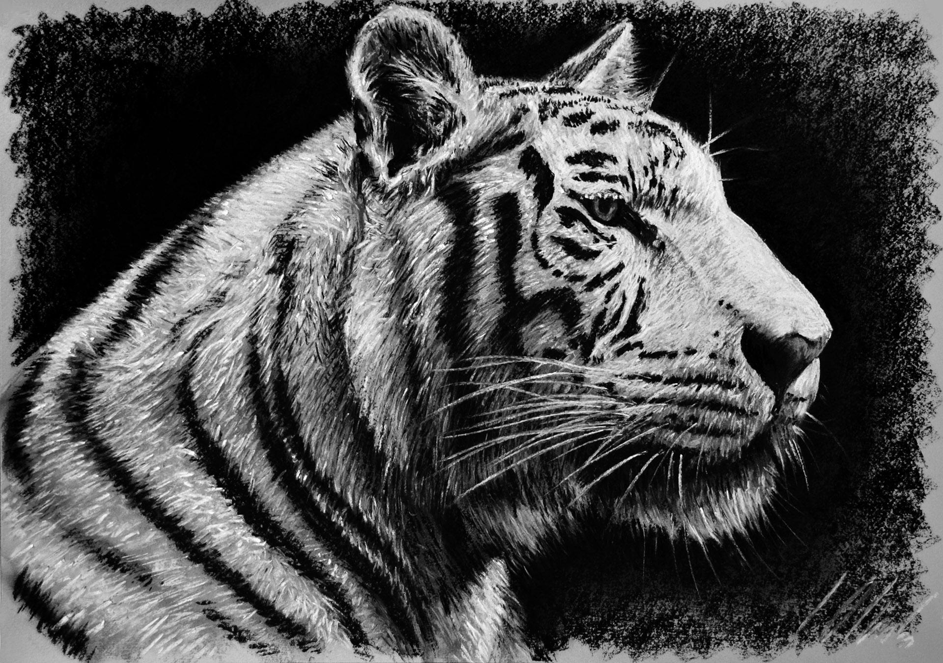 Tigre, pastel, 50 x 35 cm. Dibujo de Javier Olmedo.     2014. PV 80,00 €