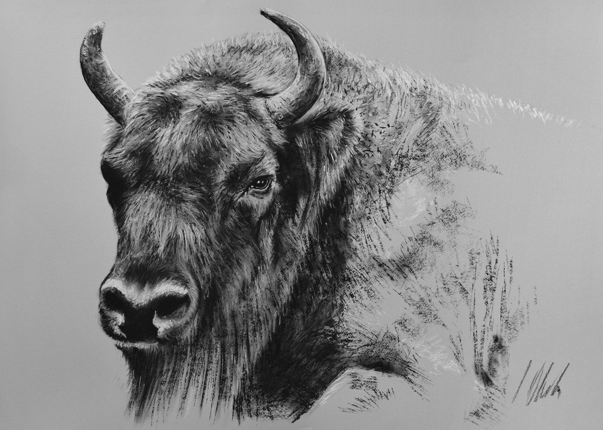 Bisonte europeo. Pastel, 70 x 50 cm. Javier Olmedo - 2016 . PV 98,00 €