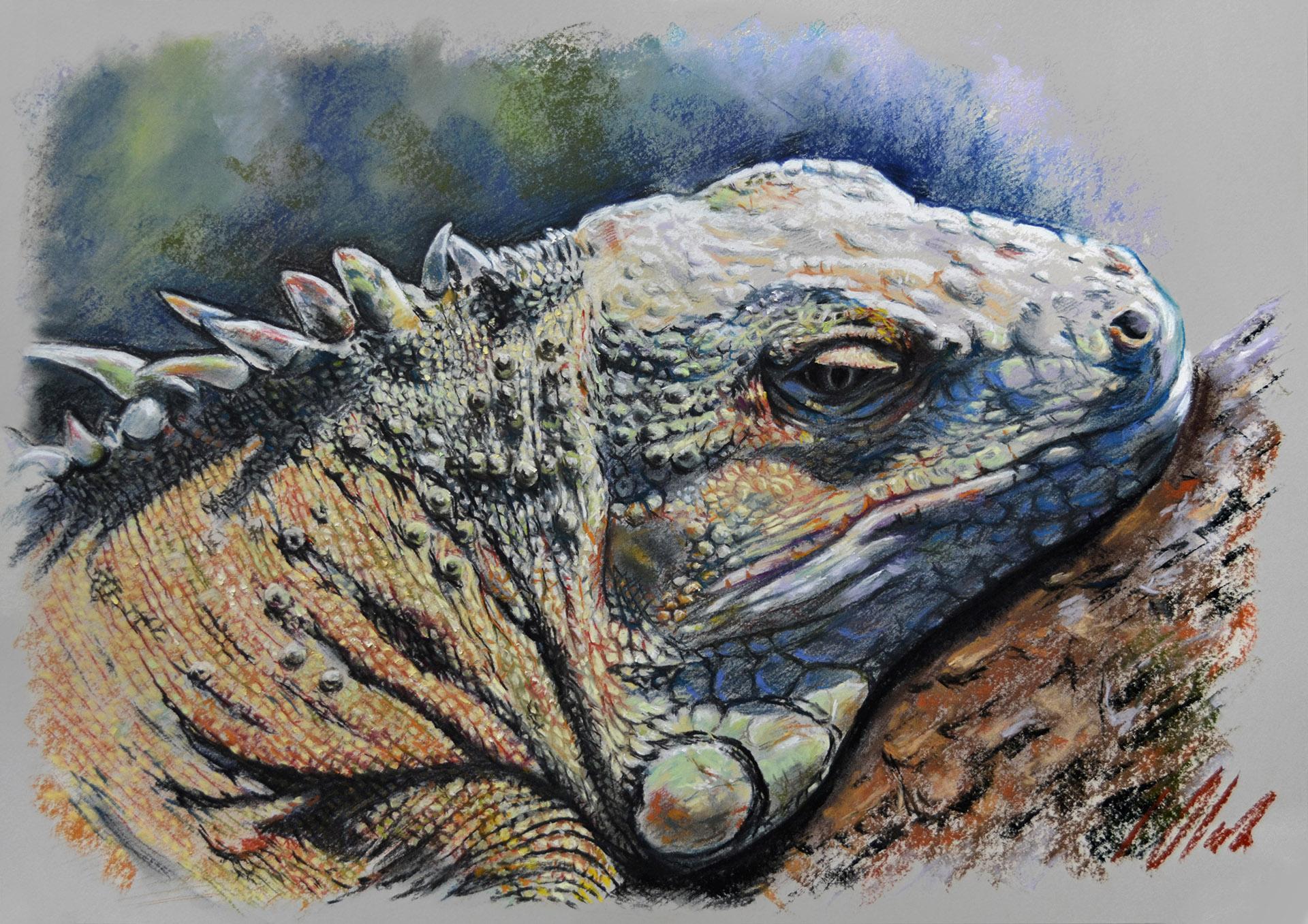Iguana, 50 x 35 cm, pastel. Javier Olmedo.  2017. PV 139,00 €