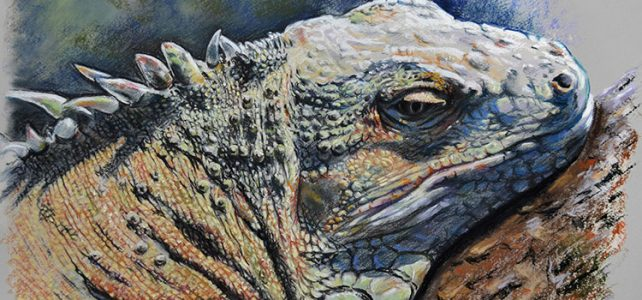 iguana y medio ambiente. Pastel, Javier Olmedo