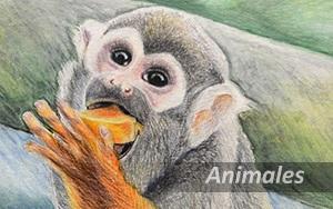 Dibujos de animales, Pilar Aceña