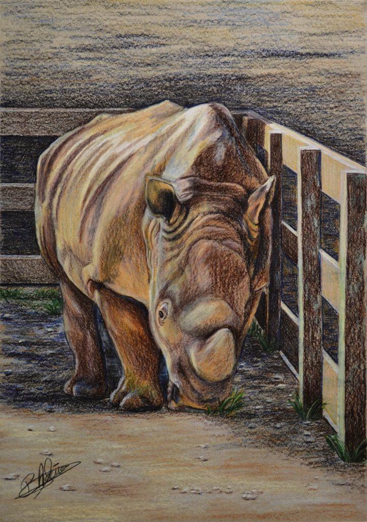 Rinoceronte blanco. Pilar Aceña, lápices de colores. 2018. PVP 125 €