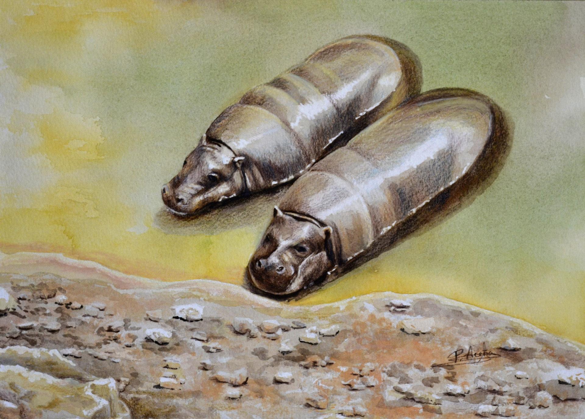 Hipopótamos pigmeo. Pilar Aceña, acuarela. 2018. PVP 125 €