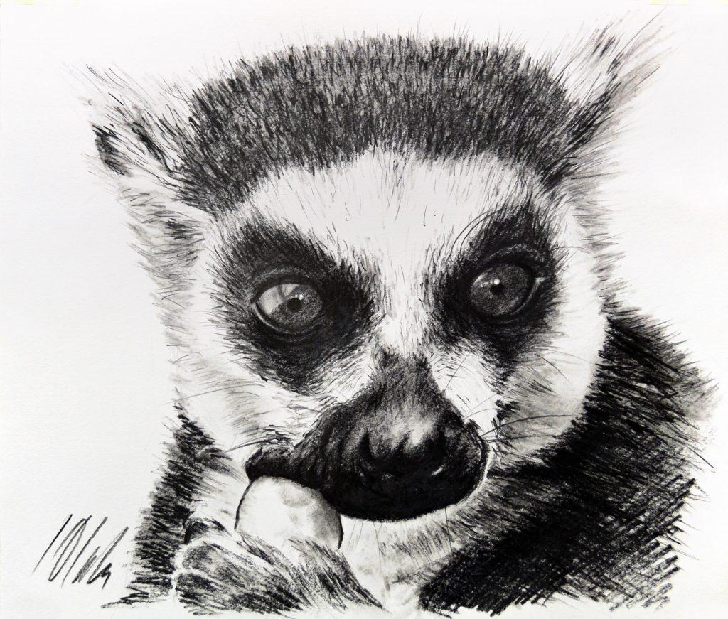 Lemur. Dibujo en grafito, 35 x 30 cm. Javier Olmedo - 2018 - PV 118,00 €